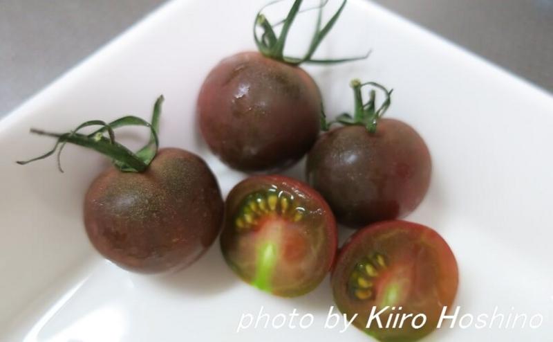 トマト色々、ブラックミニトマト