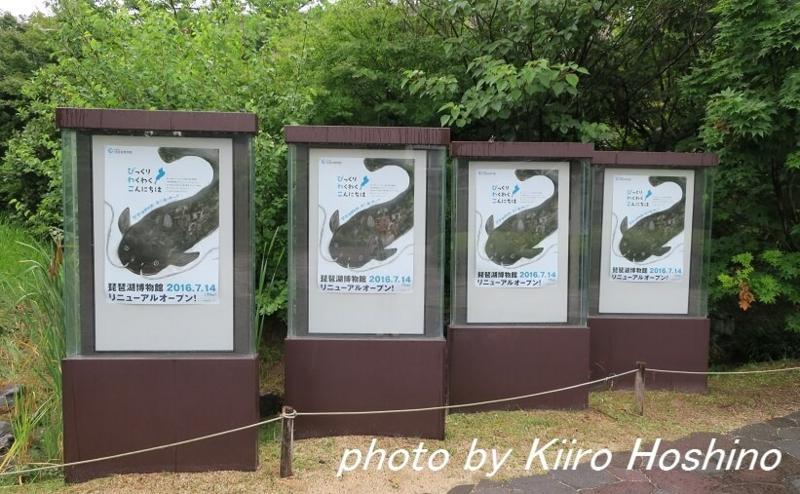 たびねす、琵琶湖博物館アイキャッチ