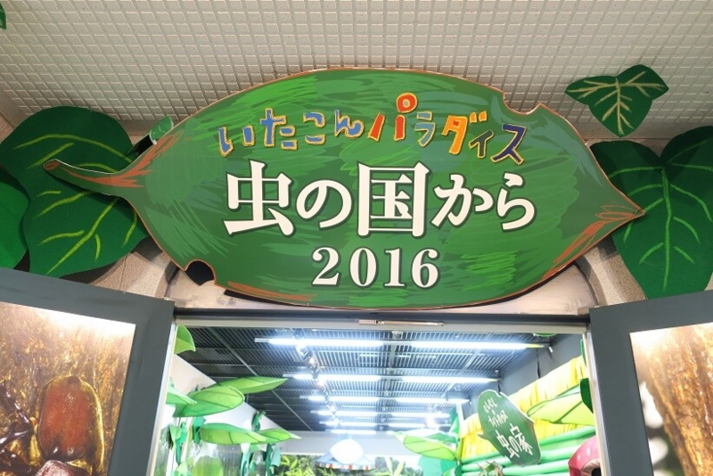 f:id:kiiroihoshi:20160810131151j:plain