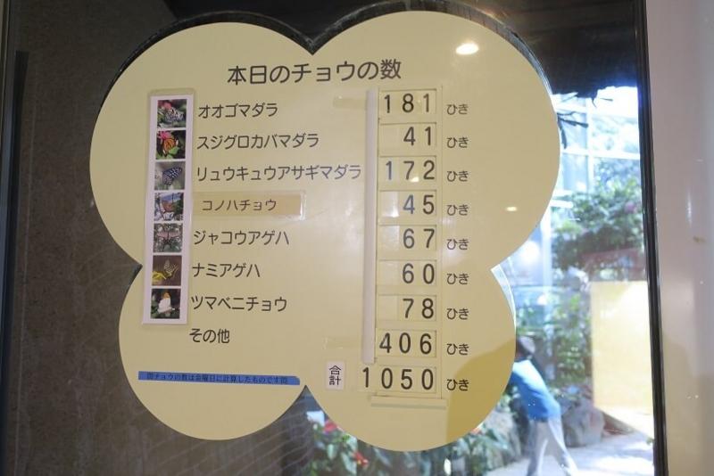伊丹市昆虫館、チョウの数