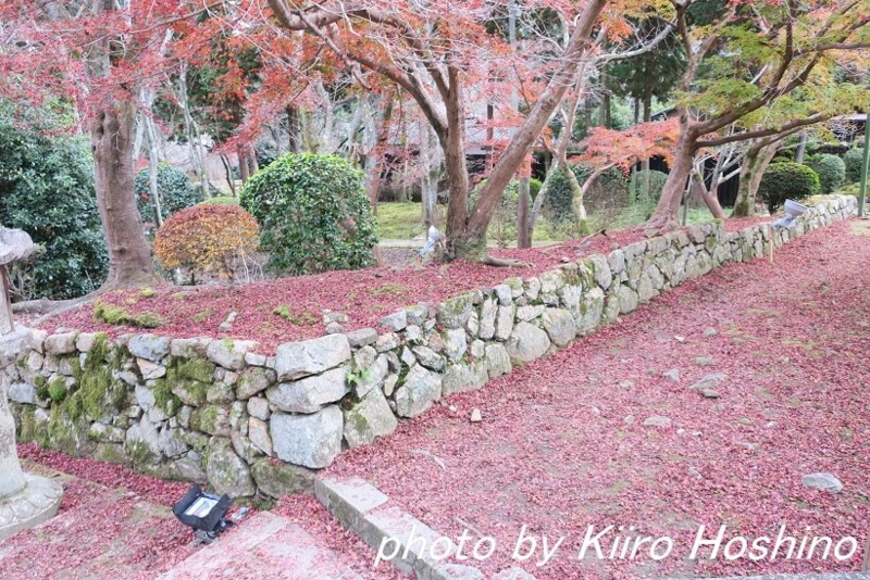 三井寺、落ち葉じゅうたん