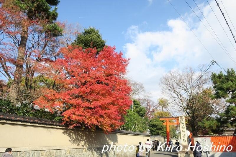 下鴨神社、鳥居前紅葉