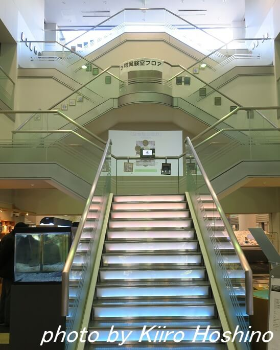 JT生命誌研究館、生命誌の階段